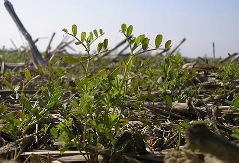 Finanziamento Agroambiente